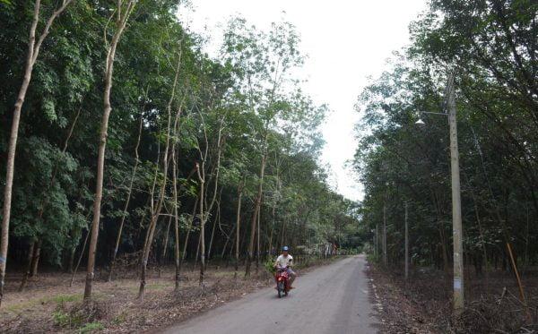 con duong xuyen qua canh rung cao su dan vao giao xu 600x373 - Xứ đạo bìa rừng - Giáo xứ Minh Thạnh (GP Phú Cường)