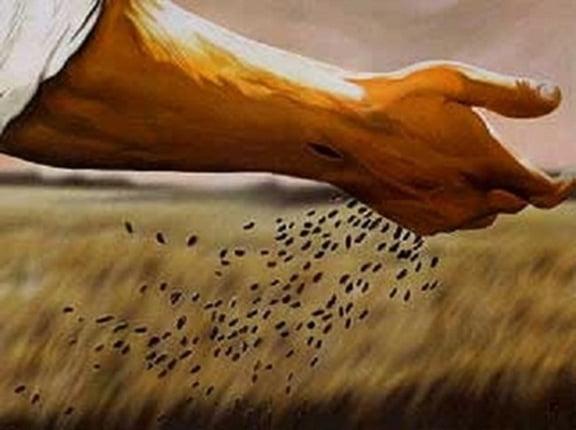 nhu hat lua mi 2 - Như hạt lúa mì