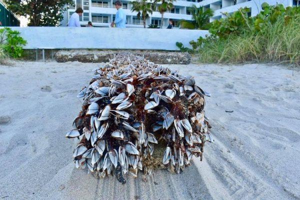 thanh gia 3 600x400 - Chuyện lạ: Cây thánh giá khổng lồ xuất hiện trên bờ biển