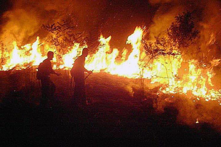 28082019 154654 750x500 - Đức Thánh Cha hướng về Amazon: Lá phổi rừng đó rất quan trọng với hành tinh của chúng ta