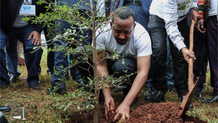 giao hoi etiopia trong cay 750x424 - Chính quyền và Giáo hội Etiopia phát động phong trào trồng 353 triệu cây xanh